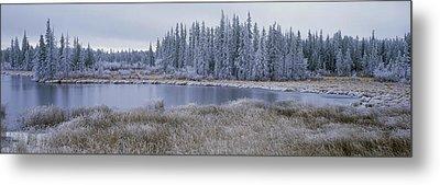 Frozen Swampland, Near 100 Mile House Metal Print by David Nunuk