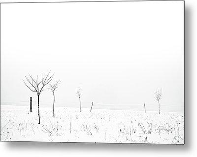 Fruit Trees Lost In Winter Fog Metal Print by Raphael Schneider