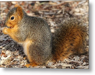 Metal Print featuring the photograph Fruity Squirel by Elizabeth Winter