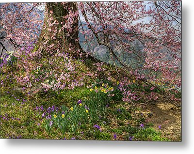 Metal Print featuring the photograph Full Bloom by Tad Kanazaki