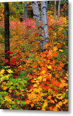 Full Fall Palette Metal Print