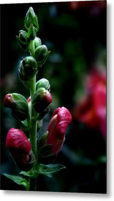 Metal Print featuring the photograph Full Of Life by Karen Harrison