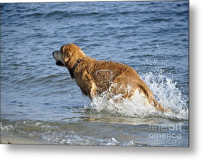 Fun Day At The Beach Metal Print by Tamera James