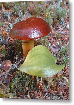 Fungus The Tapering Russula  Latin Name - Russula Saguinea Metal Print