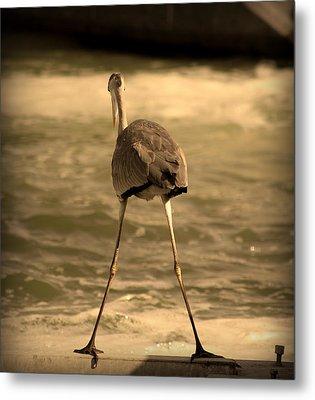 Funny Flamingo Metal Print by Radoslav Nedelchev