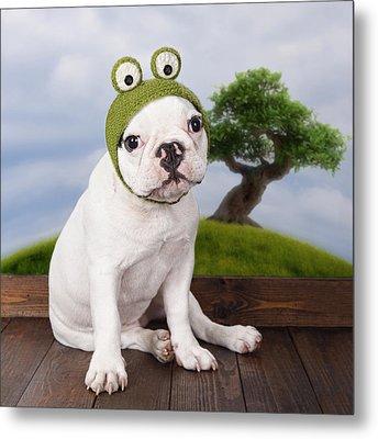 Funny French Bulldog Puppy Metal Print by Maika 777