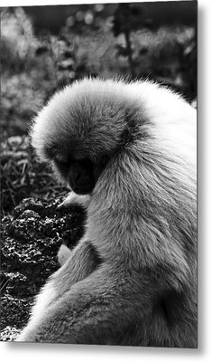 Fuzzy Monkey Metal Print