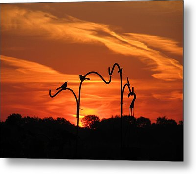 Metal Print featuring the photograph Garden Sunrise by Tina M Wenger
