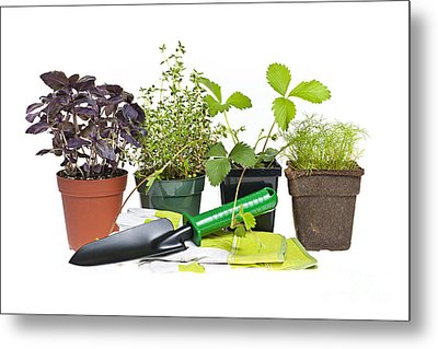 Gardening Tools And Plants Metal Print by Elena Elisseeva