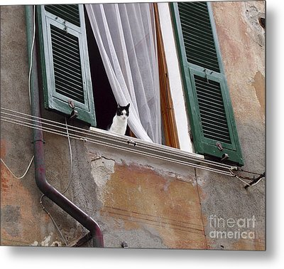 Metal Print featuring the photograph Gatto by Leslie Hunziker