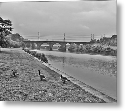 Geese Along The Schuylkill River Metal Print by Bill Cannon