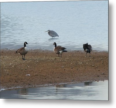 Geese And Heron Metal Print