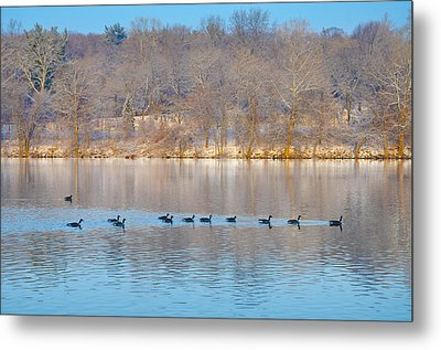 Geese In The Schuylkill River Metal Print by Bill Cannon