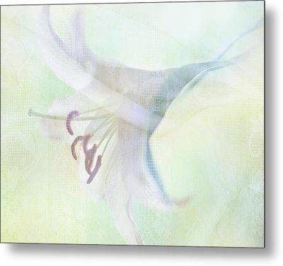 Gentle Lily Metal Print by Sharon Lapkin