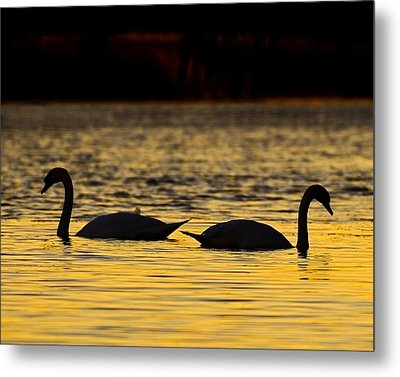 Gently Apart Metal Print by Tony Beck