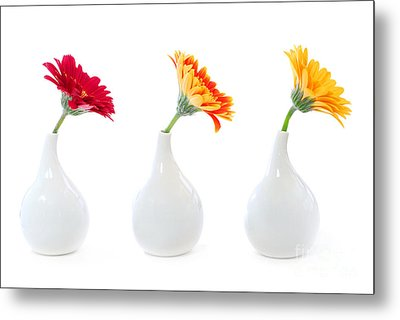 Gerbera Flowers In Vases Metal Print by Elena Elisseeva