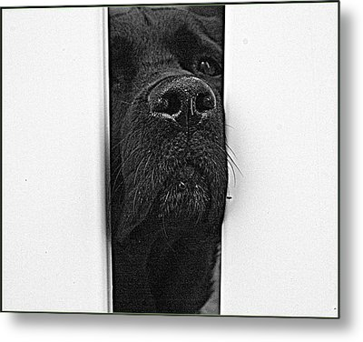 Get Me Outta Here Metal Print by Bruce Carpenter