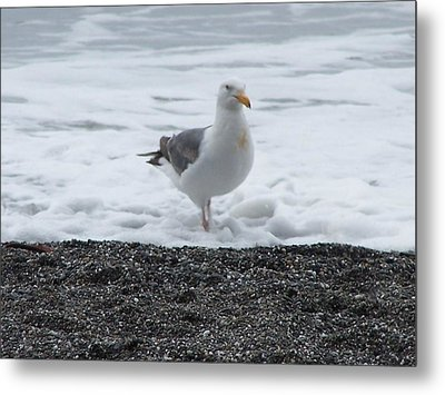 Metal Print featuring the photograph Get Your Feet Wet by Christine Drake