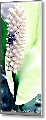 Get Your Own Flower Metal Print by Danielle  Parent