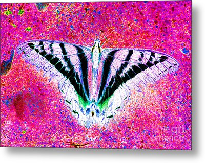 Ghost Butterfly Metal Print by Nick Gustafson