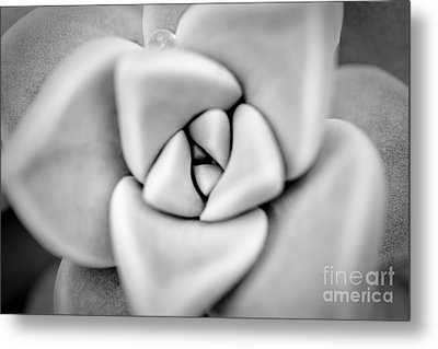 Ghost Petals Metal Print by Pixel Perfect by Michael Moore