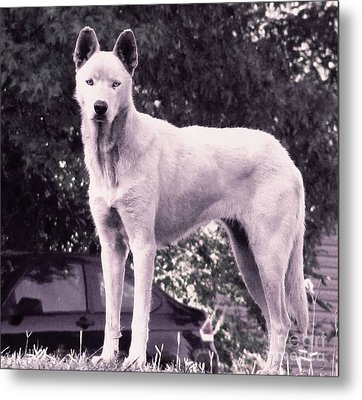 Ghost The Wolf Metal Print by Maria Urso