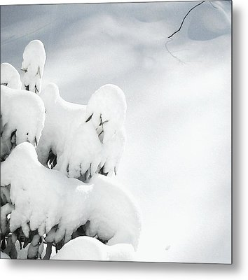 Metal Print featuring the photograph Ghostly Snow Covered Bush by Pamela Hyde Wilson