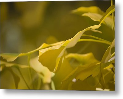 Metal Print featuring the photograph Ginko 2 by Lisa Missenda