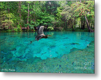 Ginnie Springs Metal Print by Barbara Bowen