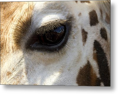Metal Print featuring the photograph Giraffe Eye by Carrie Cranwill