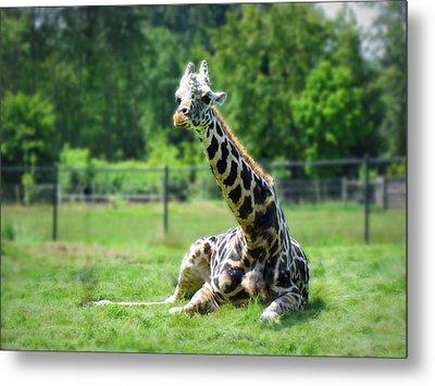 Giraffe II Metal Print by Eva Kondzialkiewicz