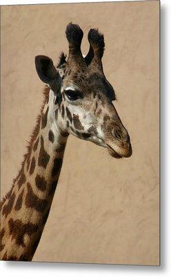 Metal Print featuring the photograph Giraffe by Kelly Hazel