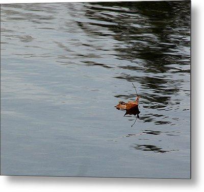 Gliding Across The Pond Metal Print by LeeAnn McLaneGoetz McLaneGoetzStudioLLCcom