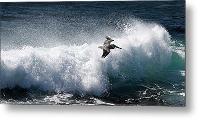 Metal Print featuring the photograph Gliding Pelican by Michael Rock