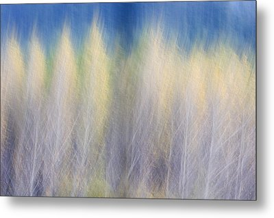 Glimpse Of Trees Metal Print by Carol Leigh