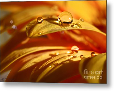 Glowing Amber Metal Print by Tracy  Hall