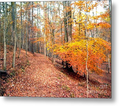 Metal Print featuring the photograph Glowing Beeches by Gretchen Allen