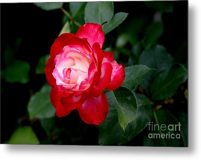 Glowing Metal Print by Living Color Photography Lorraine Lynch