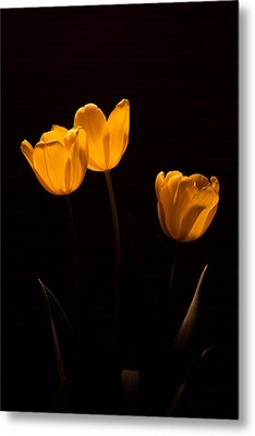 Metal Print featuring the photograph Glowing Tulips by Ed Gleichman