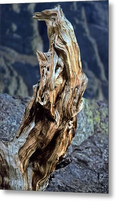 Gnarled Tree Stump Metal Print by Rod Jones