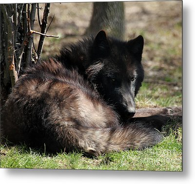 Go Away It's My Nap Time Metal Print