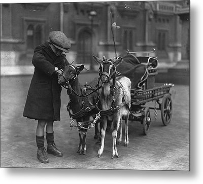 Goat Cart Metal Print by Fox Photos