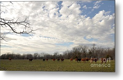 Metal Print featuring the photograph Going Home by Cheryl McClure