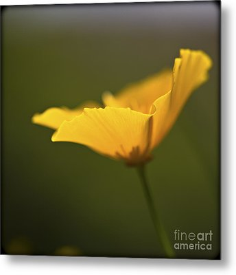 Metal Print featuring the photograph Golden Afternoon. by Clare Bambers