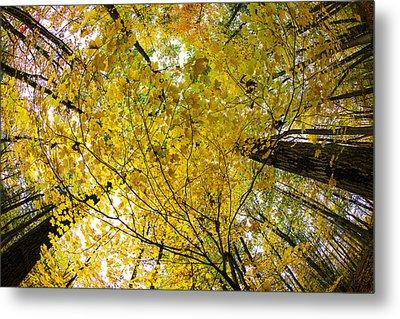 Golden Canopy Metal Print by Rick Berk