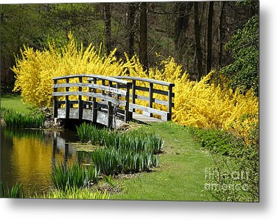 Golden Days Of Spring Metal Print
