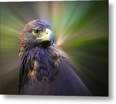 Golden Eagle Fade Metal Print by Steve McKinzie