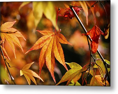 Metal Print featuring the photograph Golden Fall. by Clare Bambers