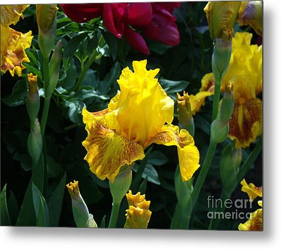 Golden Glory Metal Print by Donna Parlow