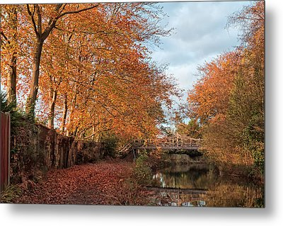 Golden Glow Metal Print by Shirley Mitchell